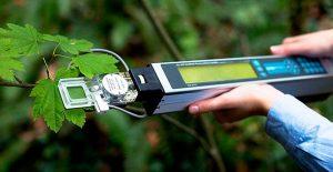 manipulacion-diferencial-fuente-sumidero-afecta-los-carbohidratos-de-las-hojas-y-la-fotosintesis-01